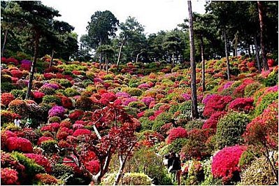 naturejardinfleurazalee01.jpg