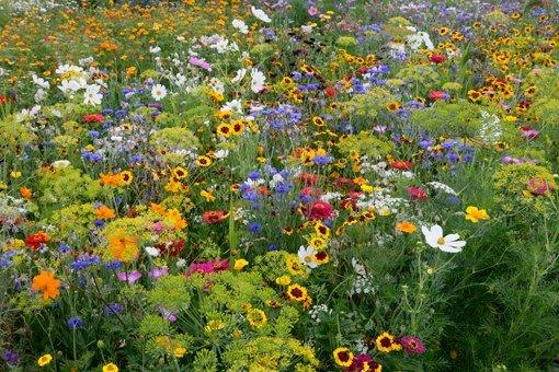 Conception et entretien cologique d espaces verts for Quand semer une pelouse