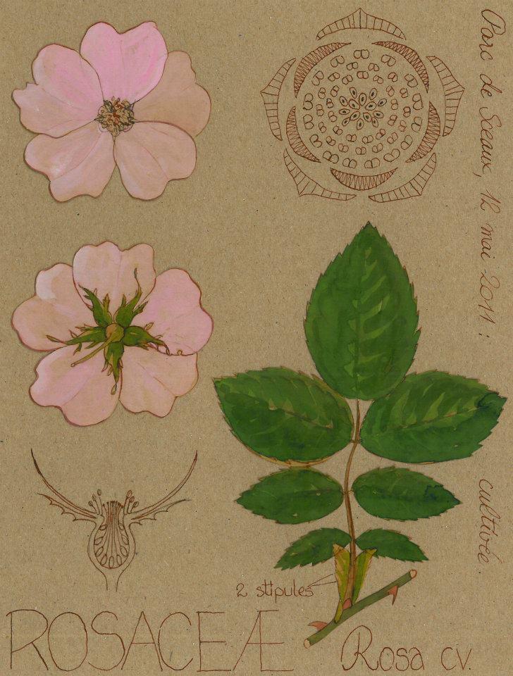 Conception et entretien cologique d espaces verts archives du blog poque de taille des - Tailler orchidee apres floraison ...