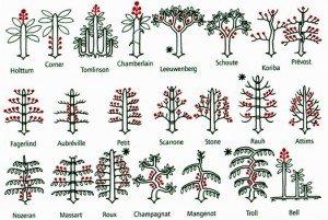 Les 22 modèles architecturaux des arbres, selon Francis HALLÉ. Sexualité en rouge ; les plus courants sont marqués d'une astérisque.
