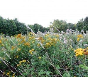 Prairie en août au Bois de Vincennes (image Paul-Robert TAKACS)