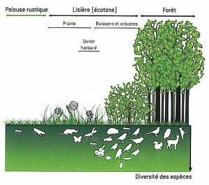 importance écologique des lisières / écotones (image Eau de Paris)