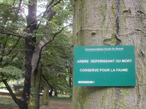 arbre mort conservé pour la faune à l'Arboretum Du Breuil (image Paul-Robert TAKACS)