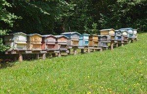 Installer des ruches ? dans B. BÂTI ruches-300x192